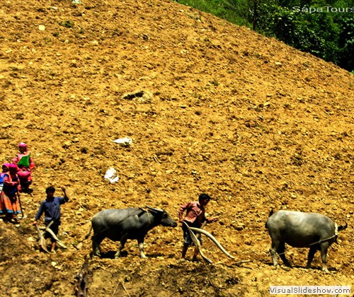 Hmong-people-working-on-mountain-sapatours