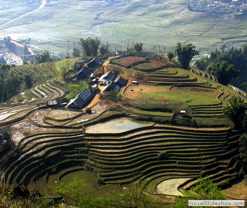 rice-terrace-sapa-vietnam