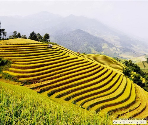 Terraced-Rice-Vietnam-Sapatoursdotcom